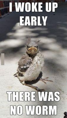 Angry-Bird-Meme.jpg