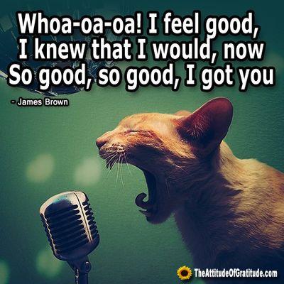 1b4f7452e71d4b7b9ccb9e9e785f45d0--funny-cats-feel-good.jpg