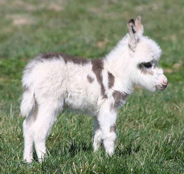 cutest-baby-animals-11.jpg