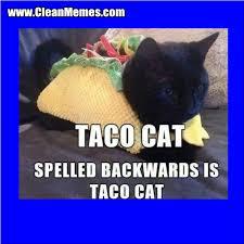 taco cat.jpg