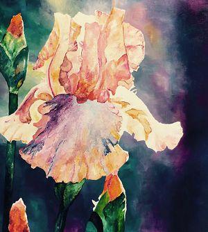 Peach Iris on Dark - L Holberg.jpeg