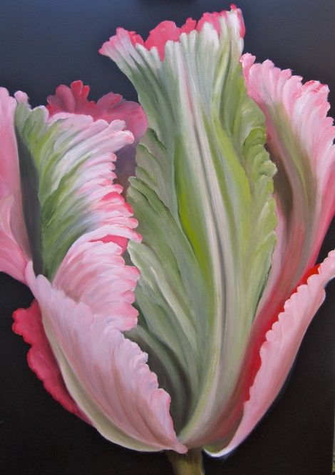 pink green parrot tulip.jpeg