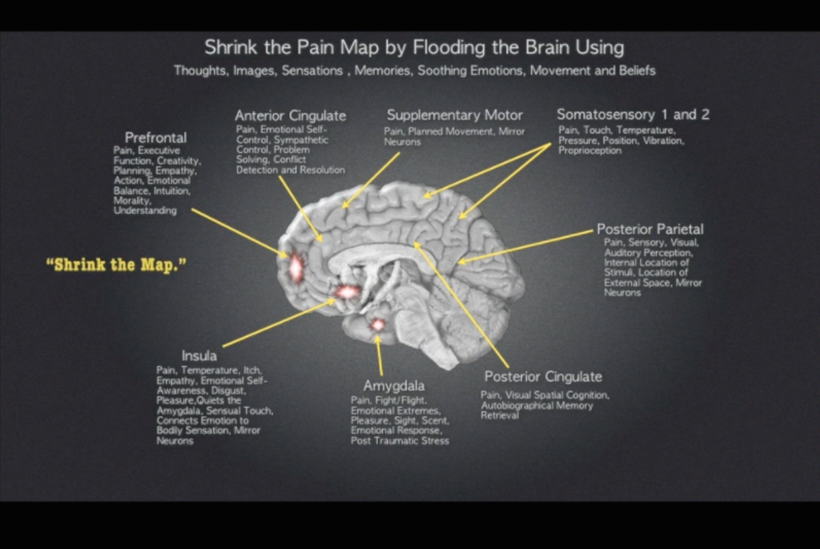 Ptsd And Full Repair Of The Limbic System