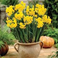 winter bulbs.jpg