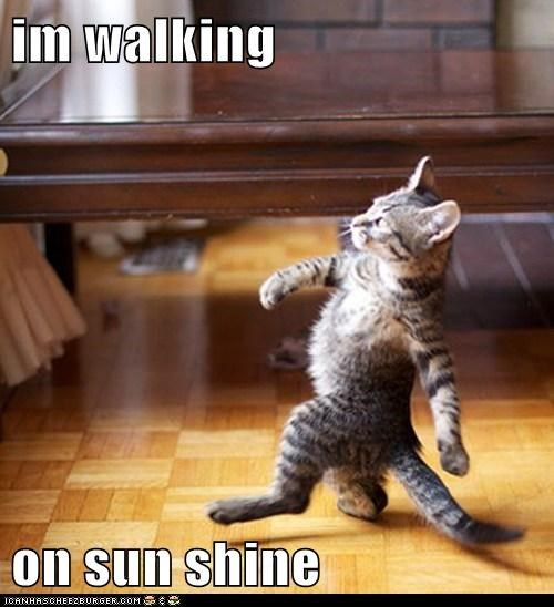 cat walking.jpeg