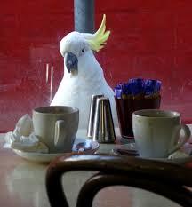 Parrot 2.png