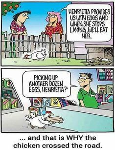 e7dda44b95317c0e2577db957c517212--chicken-animal-humor.jpg