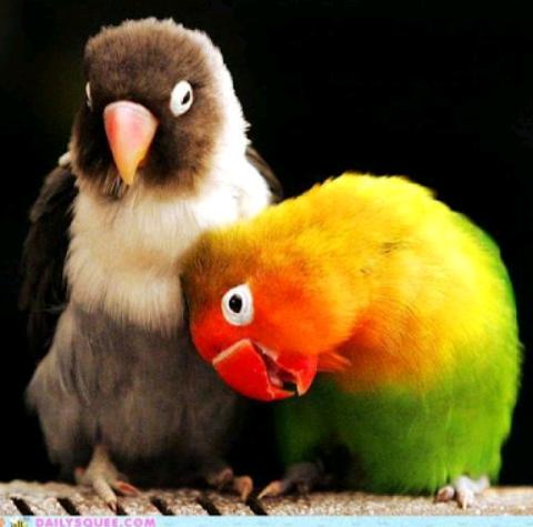 birds z.png