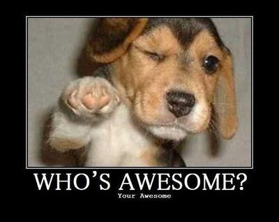 dog-awesome-680x540.jpg
