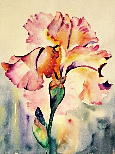 Pink Iris L Holberg.jpeg
