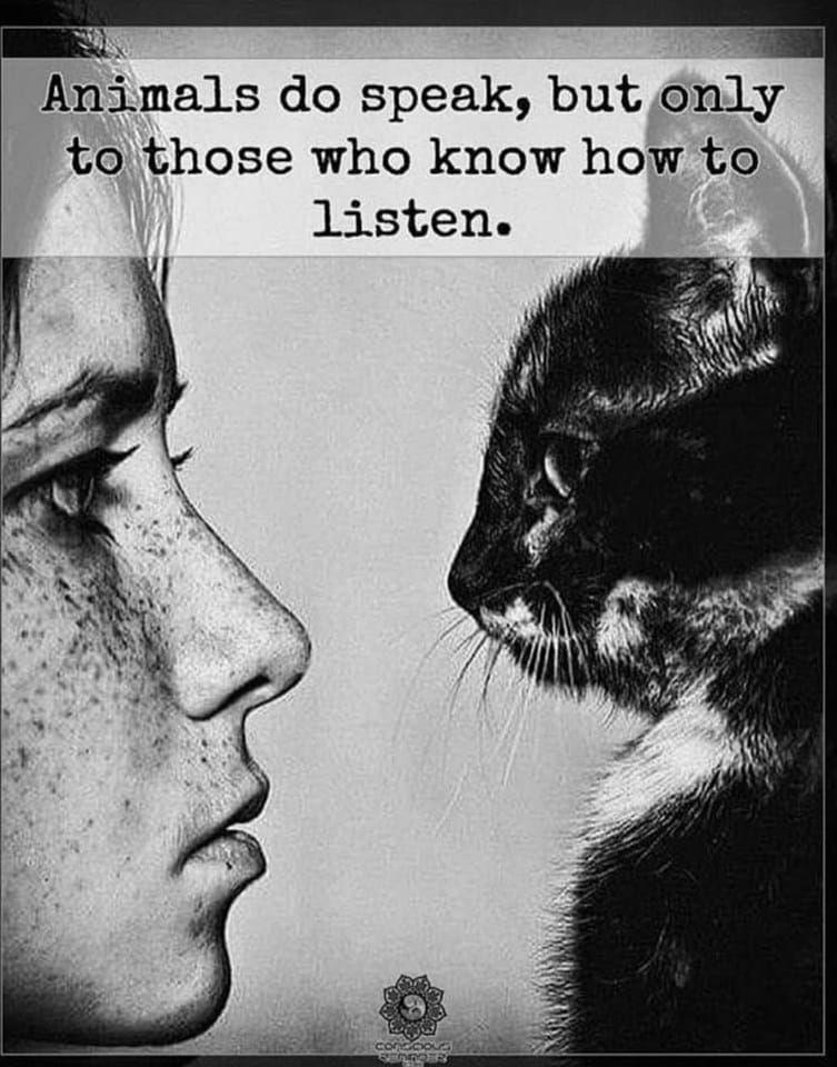 animals do speak.jpg