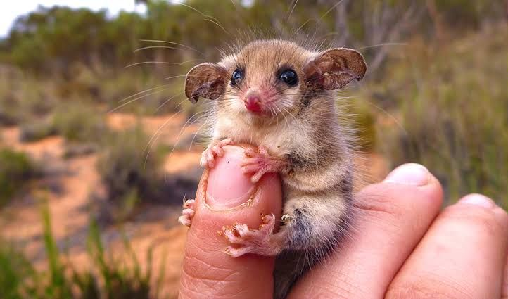 Would you look at this little guy...