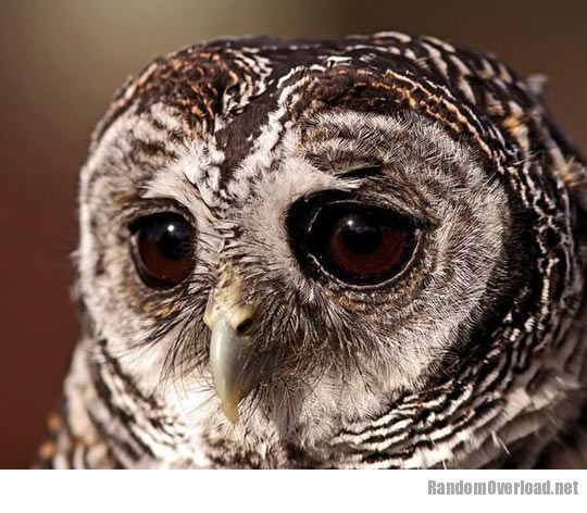 7516cute-sad-owl-portrait-big-eyes.jpg